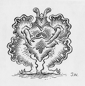 """Inking exercise"" is copyright ©2008 by Jim Woodring.  All rights reserved.  Reproduction prohibited."